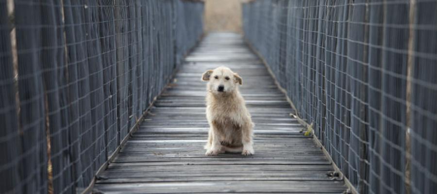 Il #ponte dei #cani #suicidi: #mistero in #Scozia